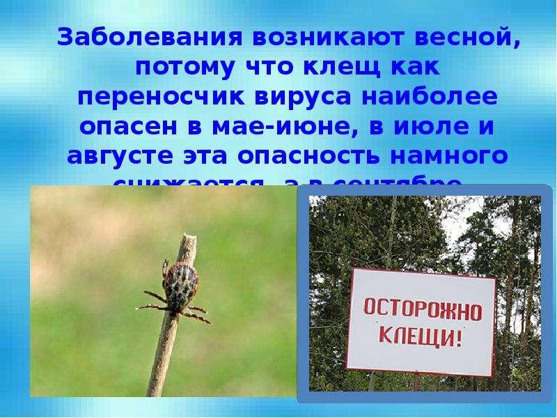 Заболевания возникают весной, потому что клещ как переносчик вируса наиболее опасен в мае-июне, в ию