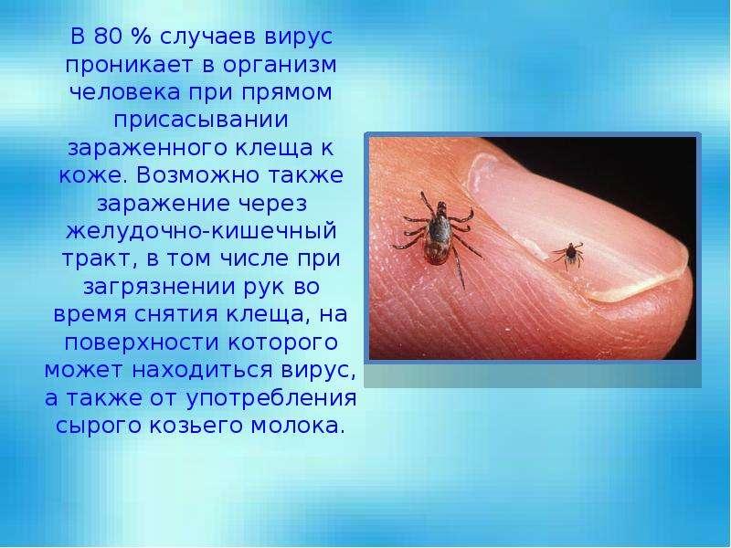 В 80 % случаев вирус проникает в организм человека при прямом присасывании зараженного клеща к коже.