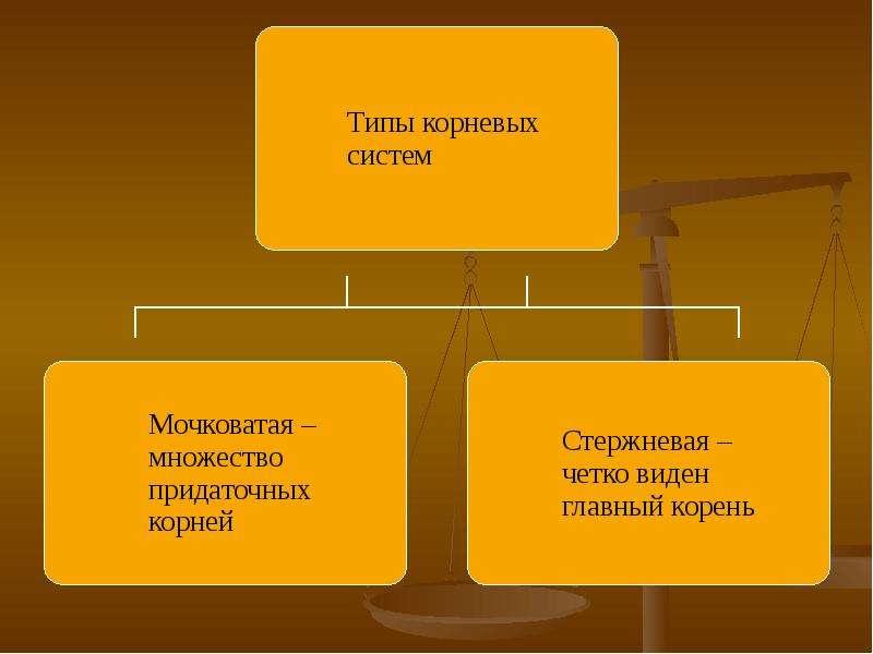 Внешнее и внутреннее строение корня, слайд 5