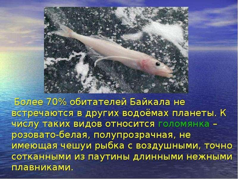 Более 70% обитателей Байкала не встречаются в других водоёмах планеты. К числу таких видов относится