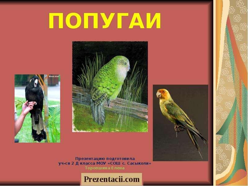 Презентация Попугаи