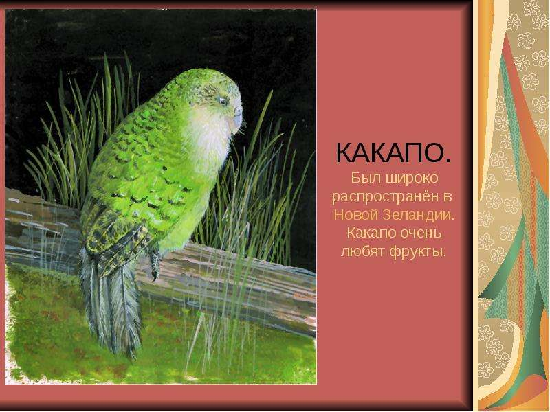 КАКАПО. Был широко распространён в Новой Зеландии. Какапо очень любят фрукты.