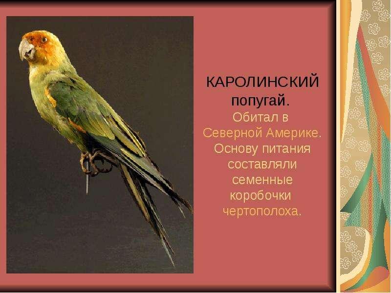КАРОЛИНСКИЙ попугай. Обитал в Северной Америке. Основу питания составляли семенные коробочки чертопо