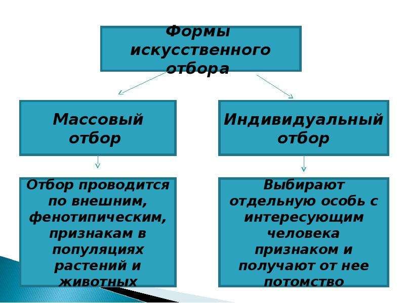 Учение Ч. Дарвина об искусственном отборе, рис. 12