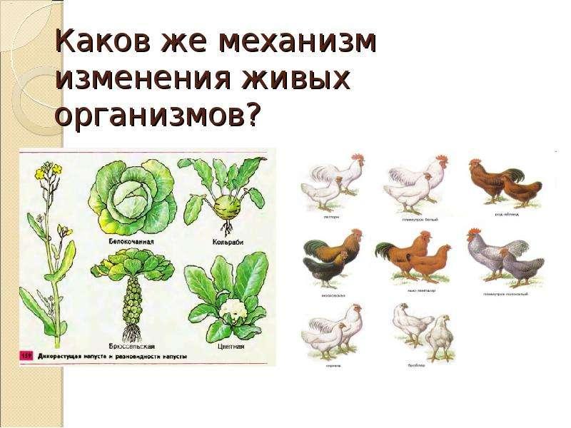 Каков же механизм изменения живых организмов?
