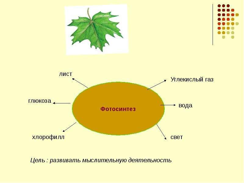 Рефлексия на уроках биологии (размышление), слайд 8