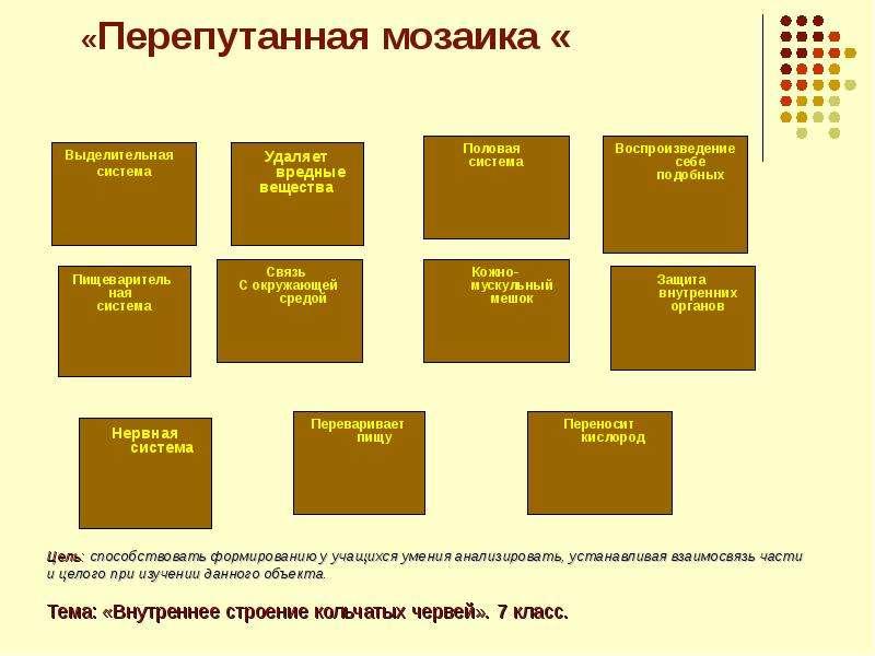 «Перепутанная мозаика « Выделительная система