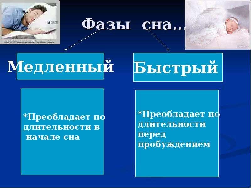 Фазы сна…