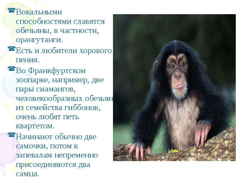 Вокальными способностями славятся обезьяны, в частности, орангутанги. Вокальными способностями славя