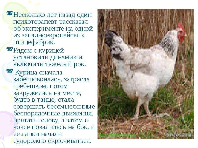 Несколько лет назад один психотерапевт рассказал об эксперименте на одной из западноевропейских птиц