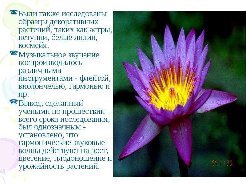 Были также исследованы образцы декоративных растений, таких как астры, петунии, белые лилии, космейя