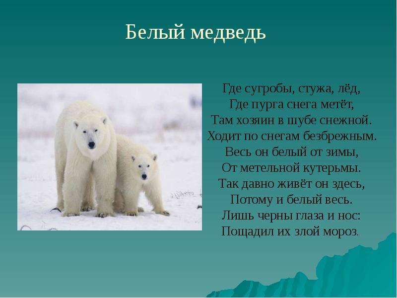 Животные Крайнего Севера, слайд 3