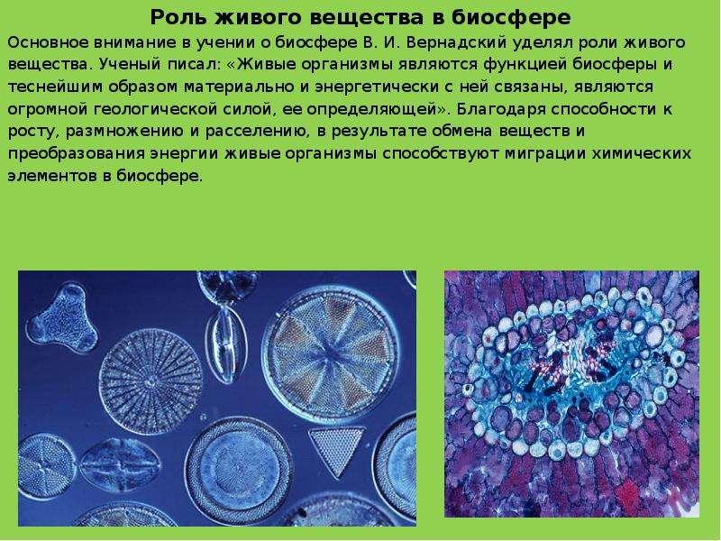Роль живого вещества в биосфере Роль живого вещества в биосфере Основное внимание в учении о биосфер