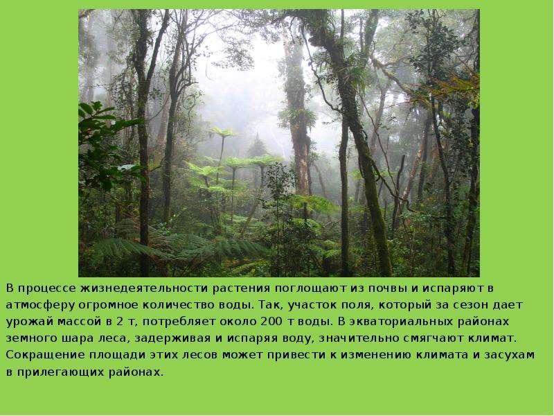 В процессе жизнедеятельности растения поглощают из почвы и испаряют в В процессе жизнедеятельности р