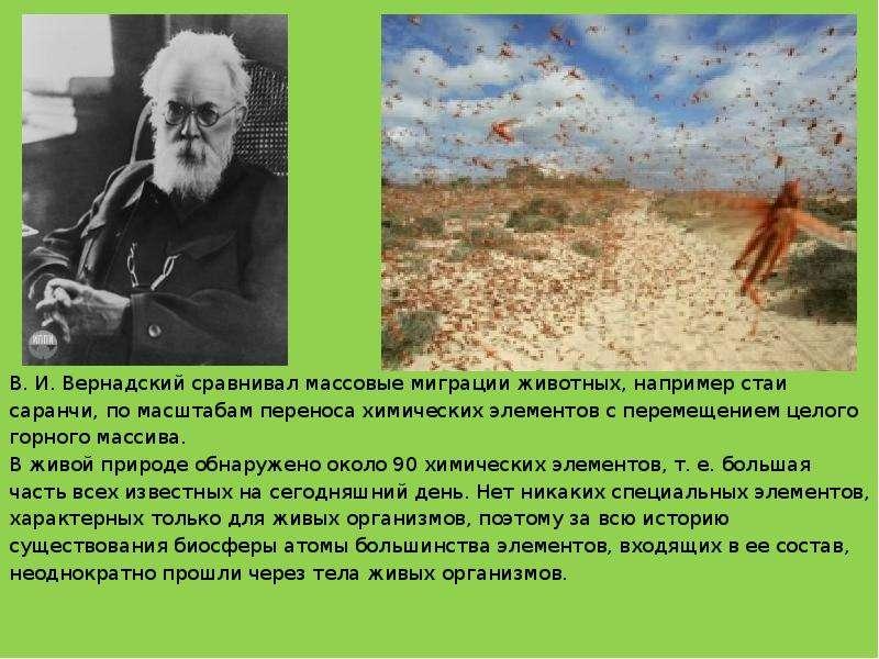 В. И. Вернадский сравнивал массовые миграции животных, например стаи В. И. Вернадский сравнивал масс