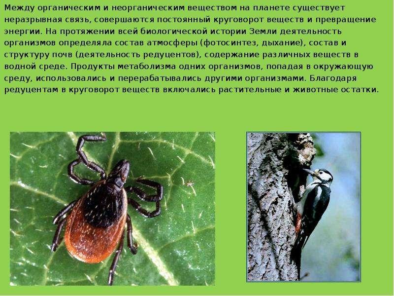 Между органическим и неорганическим веществом на планете существует Между органическим и неорганичес