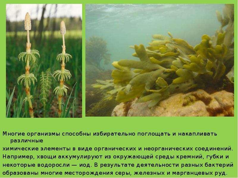 Многие организмы способны избирательно поглощать и накапливать различные Многие организмы способны и
