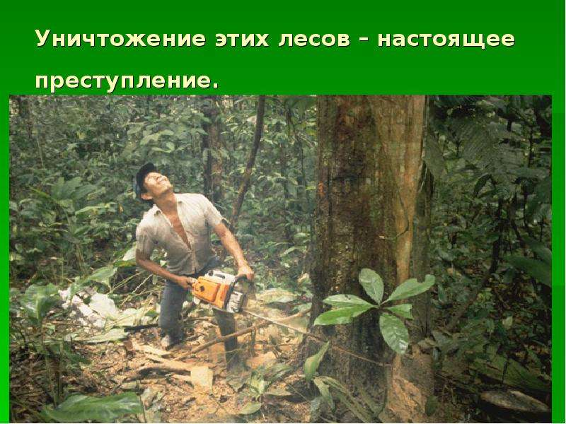 Рисунок исчезновение тропического леса