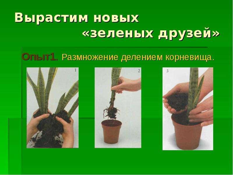 """Наш """"зеленый друг"""" - презентация, доклад, проект скачать"""