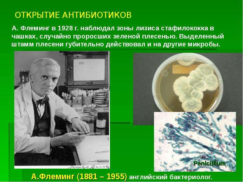 ОТКРЫТИЕ АНТИБИОТИКОВ А. Флеминг в 1928 г. наблюдал зоны лизиса стафилококка в чашках, случайно прор