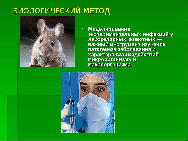 БИОЛОГИЧЕСКИЙ МЕТОД Моделирование экспериментальных инфекций у лабораторных животных — важный инстру