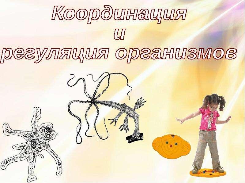 Презентация Координация и регуляция организмов