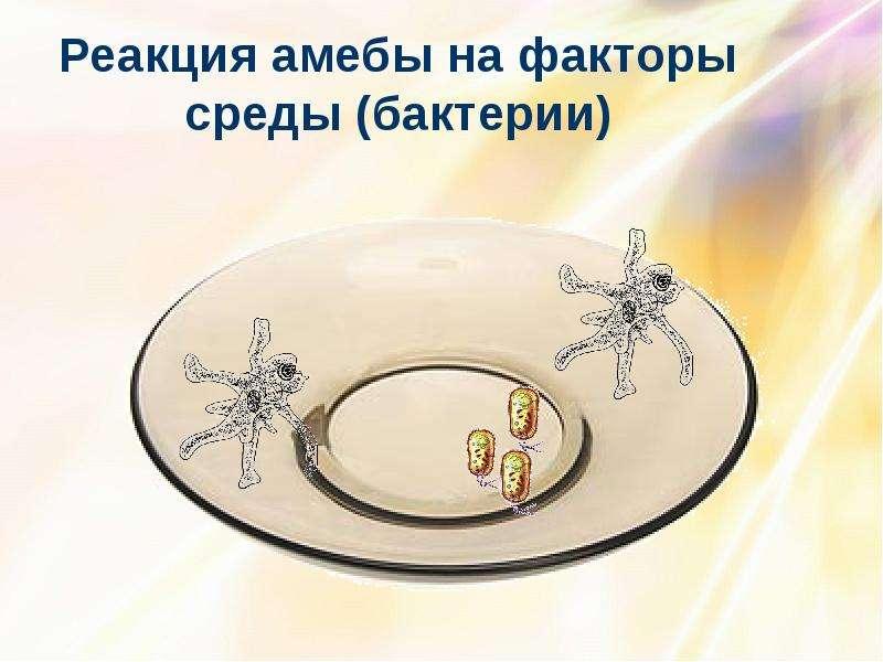 Реакция амебы на факторы среды (бактерии)