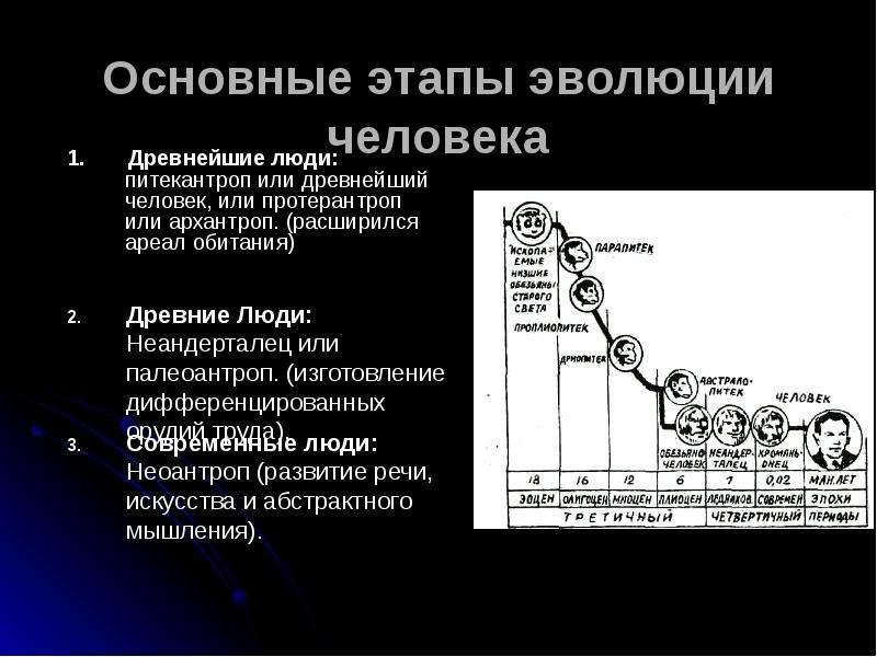 Основные этапы эволюции человека 1. Древнейшие люди: питекантроп или древнейший человек, или протера