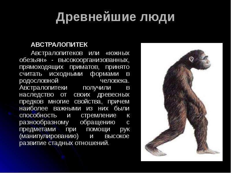 Древнейшие люди АВСТРАЛОПИТЕК Австралопитеков или «южных обезьян» - высокоорганизованных, прямоходящ