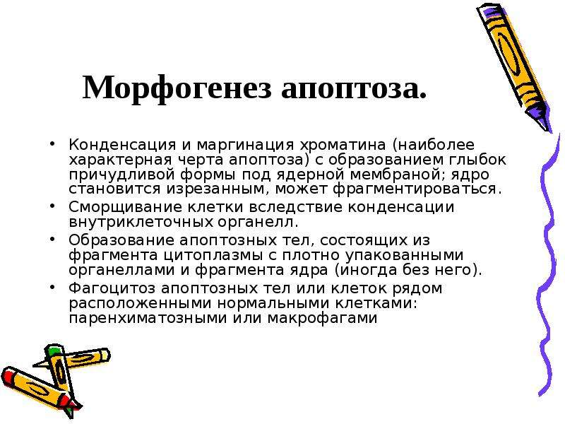 Морфогенез апоптоза. Конденсация и маргинация хроматина (наиболее характерная черта апоптоза) с обра