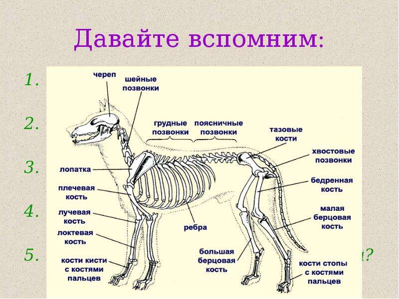 строение животного в картинках твоя