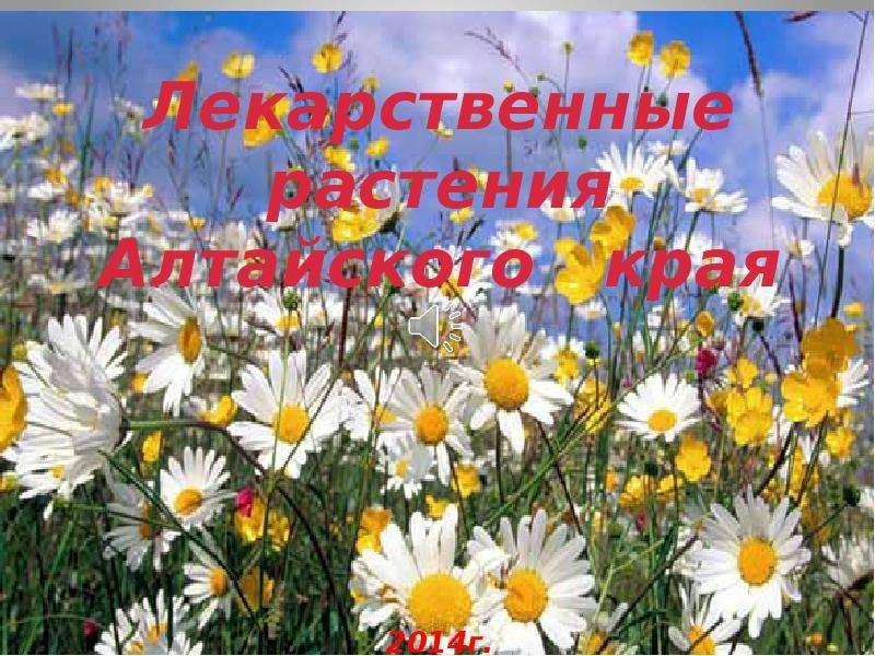Лекарственные травы алтайского края доклад 9282