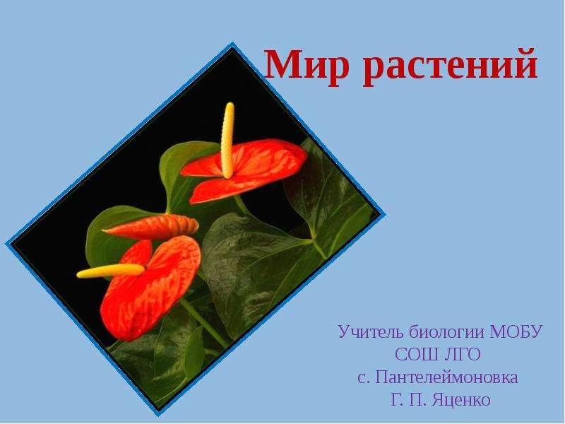 Презентация Мир растений