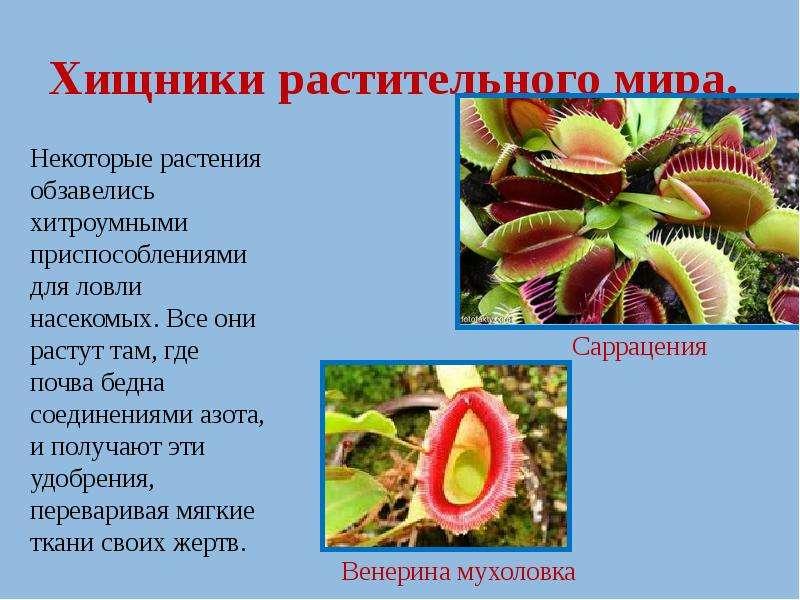 Хищники растительного мира.