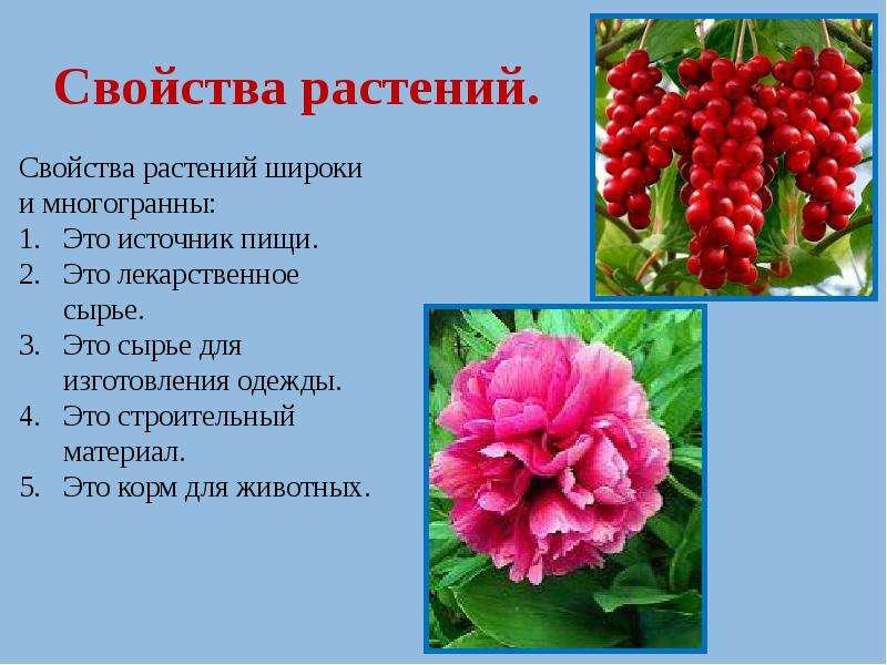 Свойства растений.