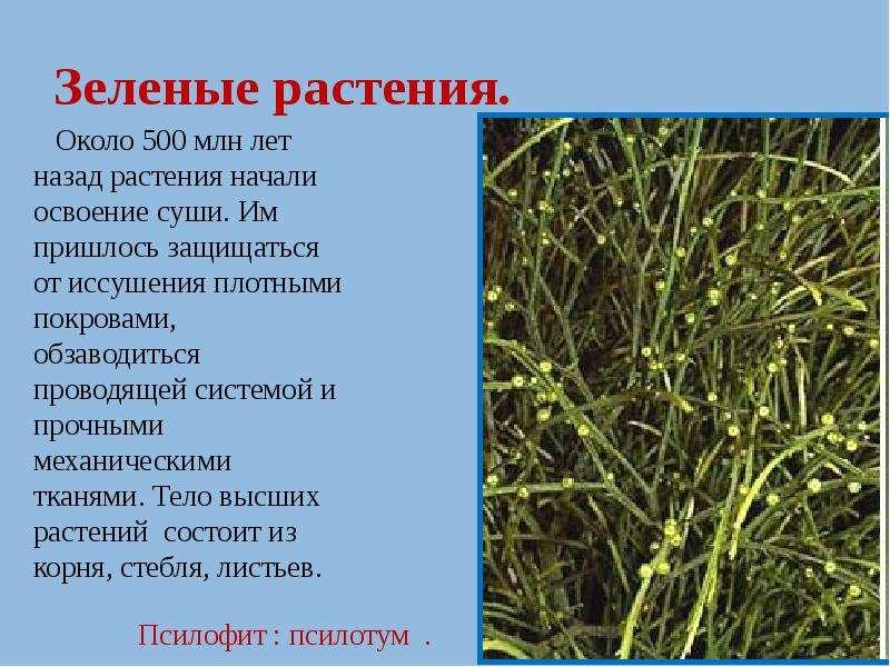 Зеленые растения.