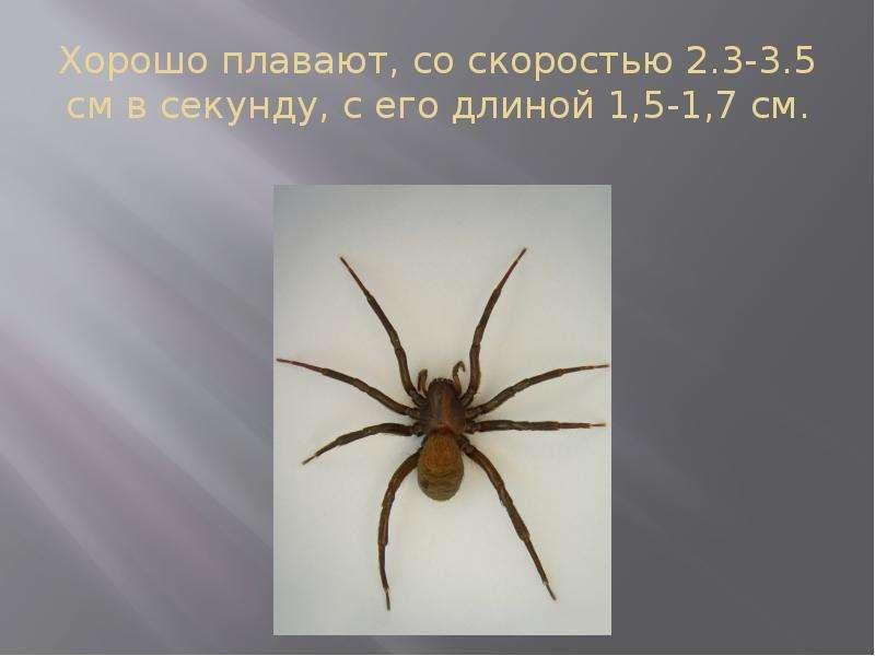 Хорошо плавают, со скоростью 2. 3-3. 5 см в секунду, с его длиной 1,5-1,7 см.