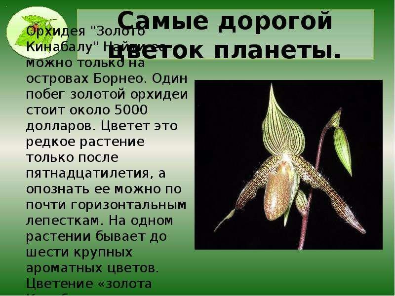 Самые дорогой цветок планеты.