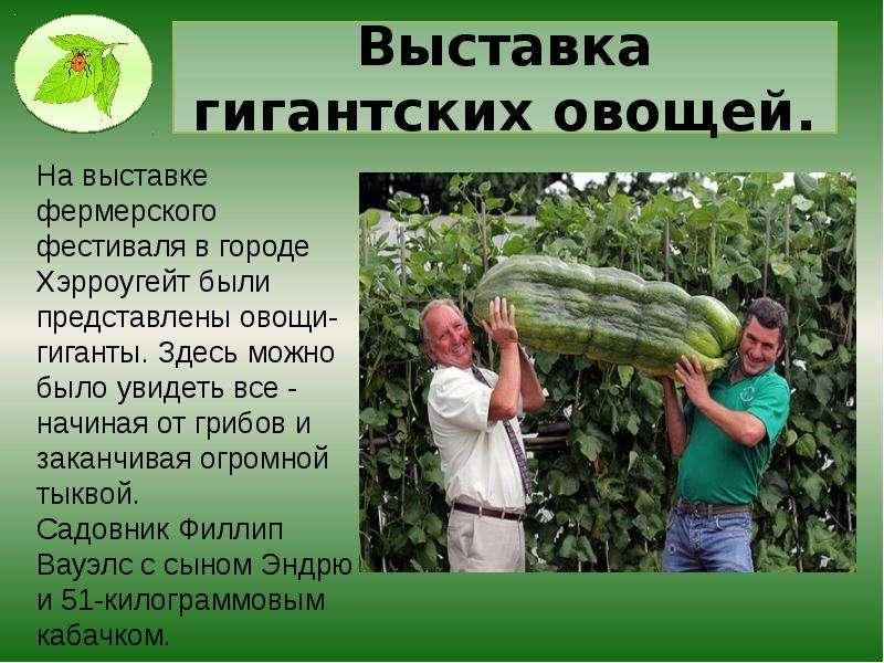 Выставка гигантских овощей.