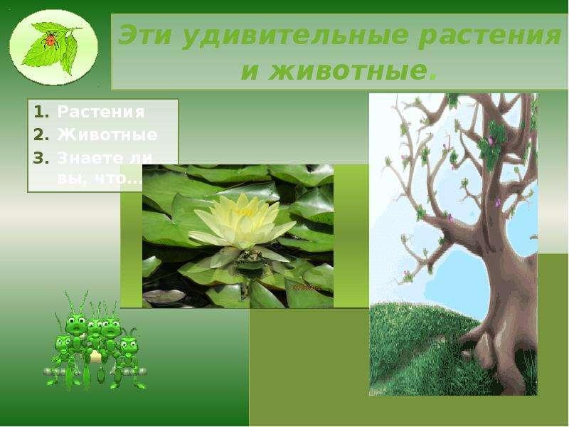 Эти удивительные растения и животные. Растения Животные Знаете ли вы, что…