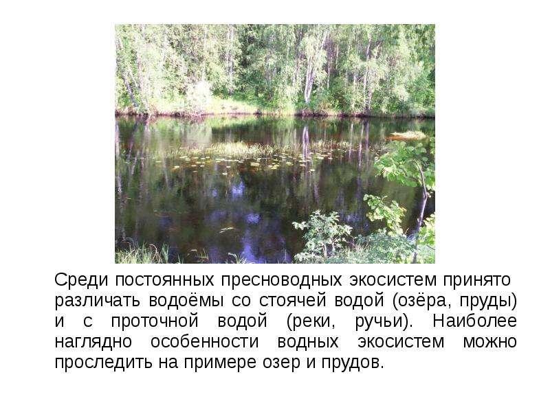 Среди постоянных пресноводных экосистем принято различать водоёмы со стоячей водой (озёра, пруды) и