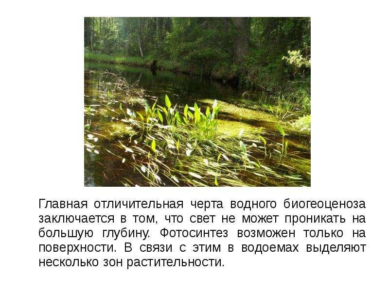 Главная отличительная черта водного биогеоценоза заключается в том, что свет не может проникать на б