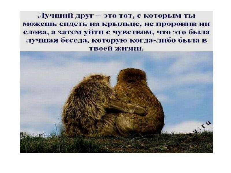 Вот что значит настоящий, верный друг, слайд 7