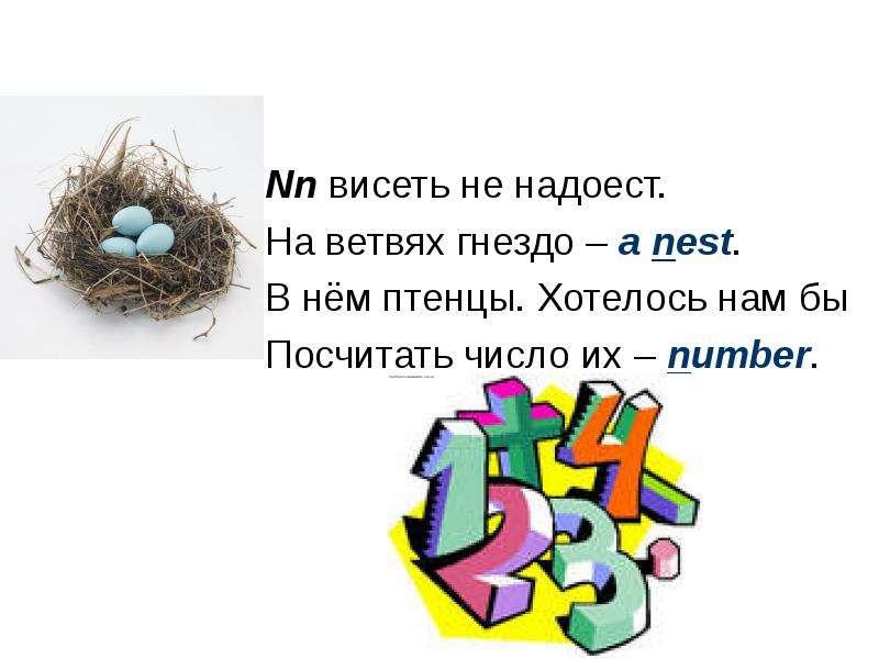 Nn висеть не надоест. На ветвях гнездо – a nest. В нём птенцы. Хотелось нам бы Посчитать число их –