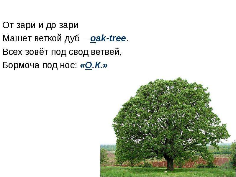 От зари и до зари Машет веткой дуб – oak-tree. Всех зовёт под свод ветвей, Бормоча под нос: «О. К. »