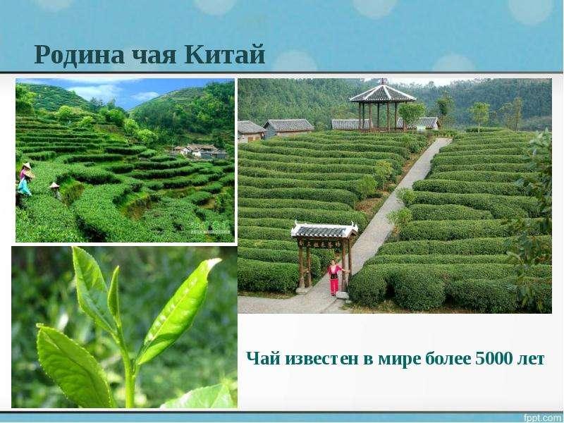 Родина чая Китай