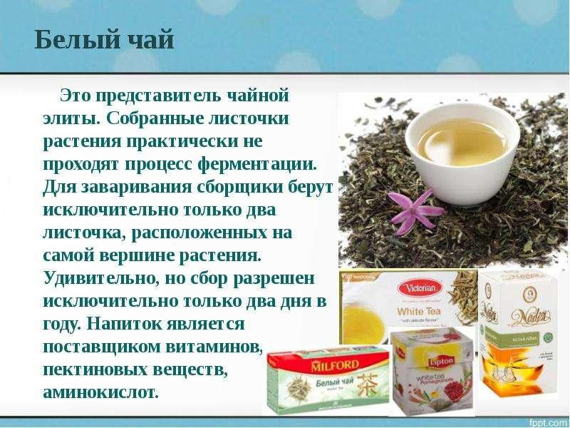Белый чай Это представитель чайной элиты. Собранные листочки растения практически не проходят процес