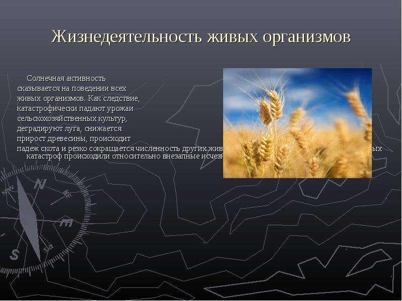 Жизнедеятельность живых организмов Солнечная активность сказывается на поведении всех живых организм