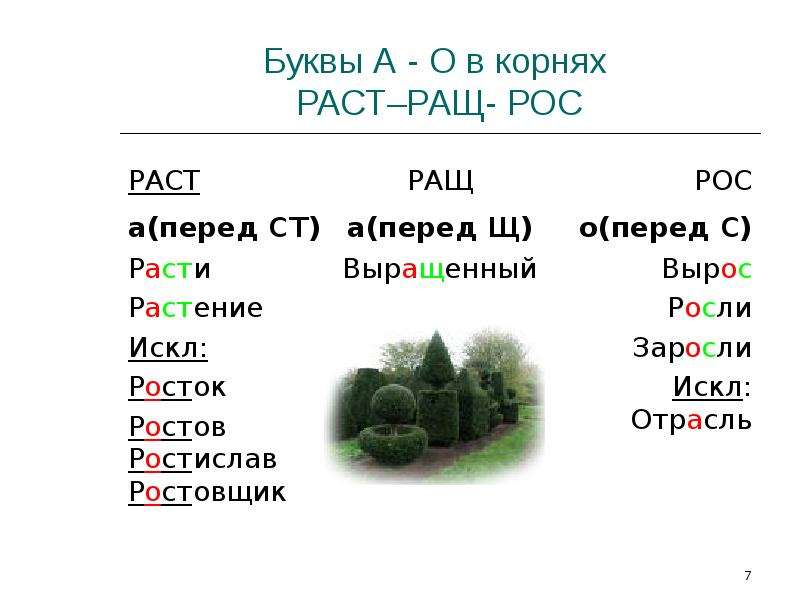 Буквы А - О в корнях РАСТ–РАЩ- РОС