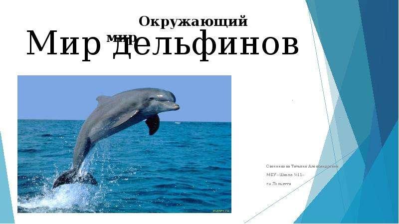 Презентация Мир дельфинов